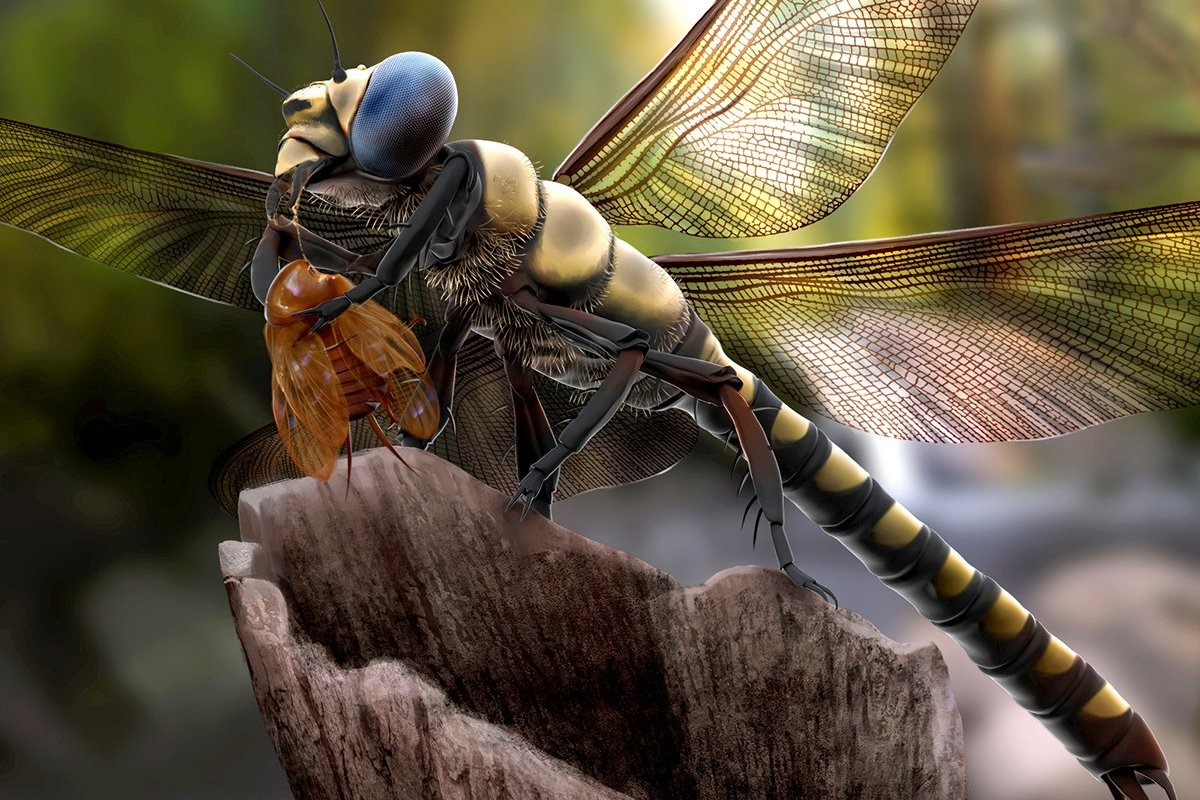 The biggest insect ever was a huge dragonfly | Earth Archives