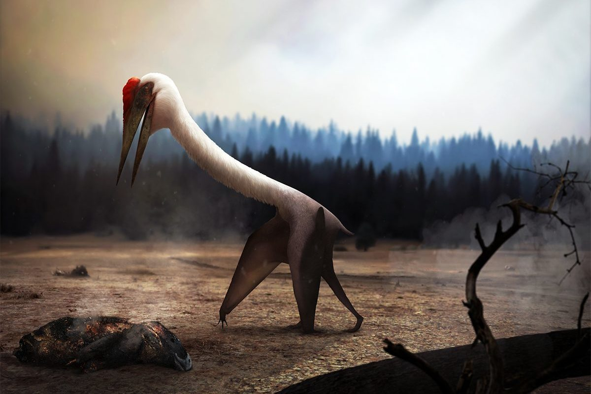 A Quetzalcoatlus inspects the ground for food in the aftermath of a forest fire.