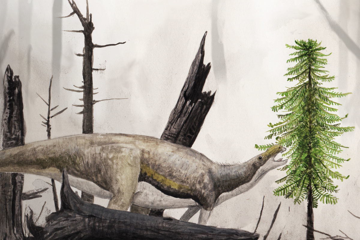 Wollemi Pine and a Muttaburrasaurus