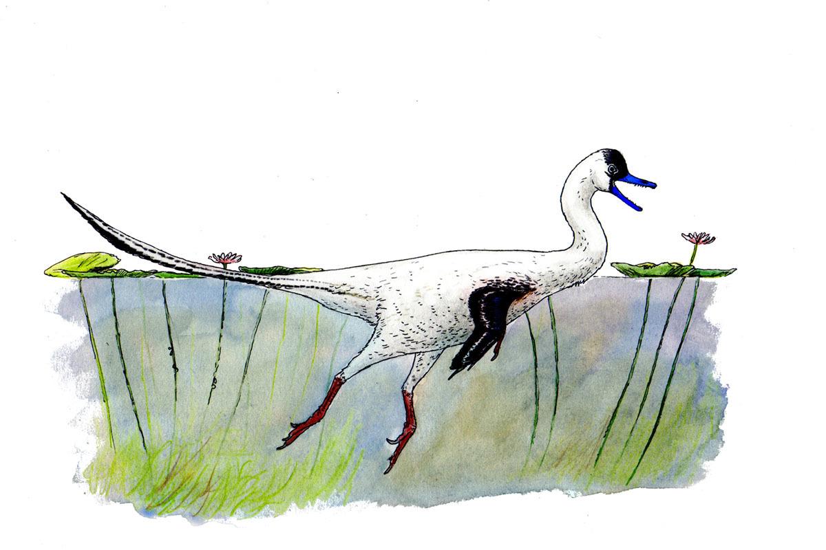 An artist's reconstruction of Halszkaraptor