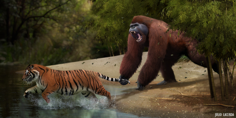 Gigantopithecus What killed the real-l...