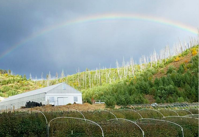 Such a nice way to end the day of #harvesting yesterday with a #doublerainbow and a lingering single over the #garden. Hope all of you are enjoying #Croptober. ? #BensonElvis Source: a_wandering_vagabond via Instagram