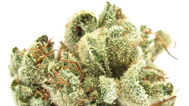 GG #4 from GG Strains SOURCE: David Downs