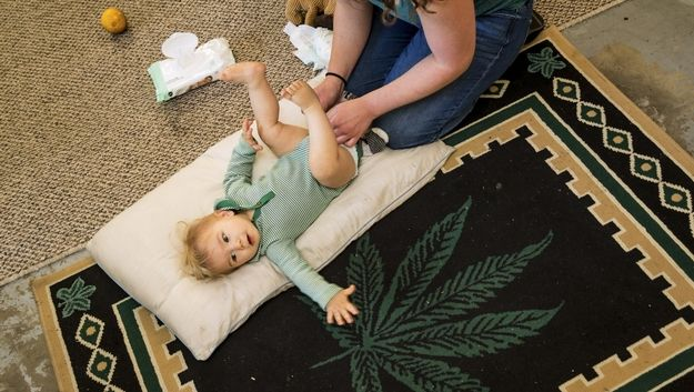 maternal cannabis use