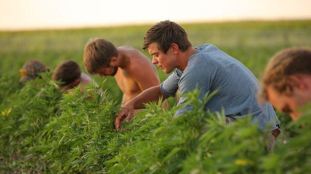Small cannabis farmer outlook