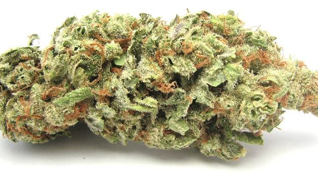 what are sativas - red dragon