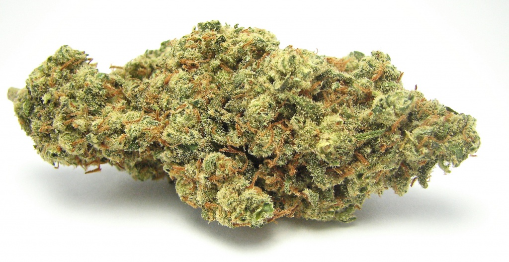 The strain Jack Herer is associated with a soaring energetic effect. | Photo by David Downs