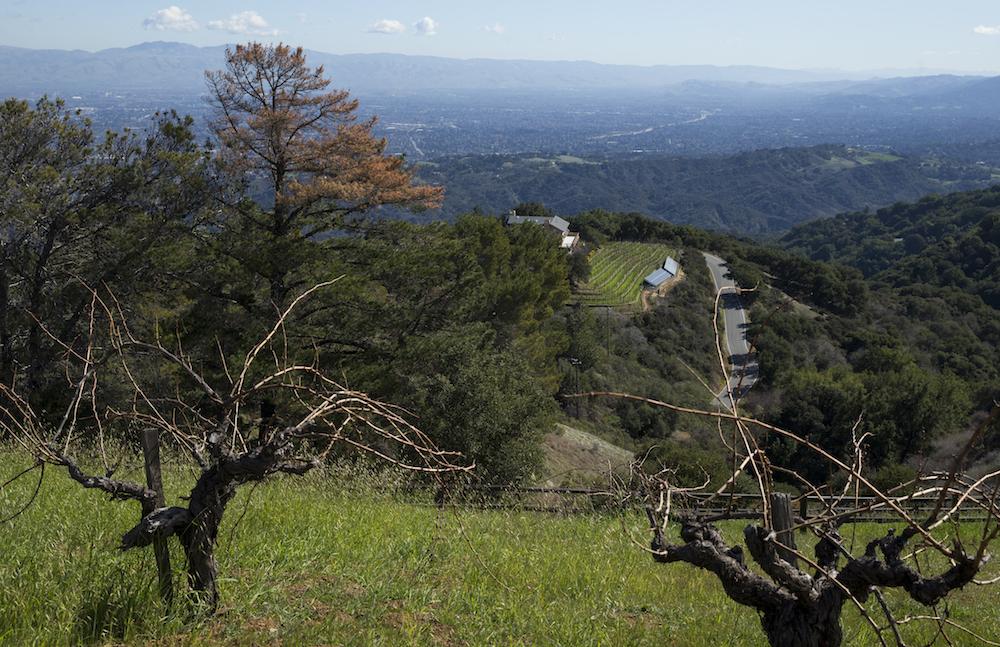 Ridge, Ridge Vineyards, Ridge Vineyard, Monte Bello, Ridge Wine