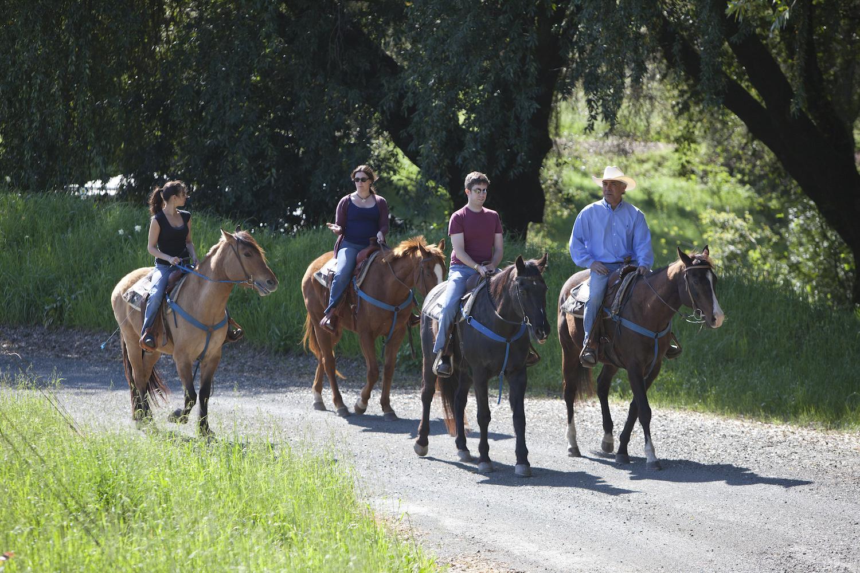 Chalk Hill, Chalk Hill Estate, Equestrian, horses, tasting room