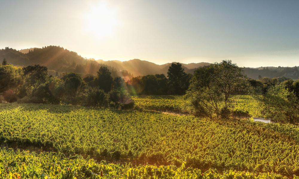 Dry Creek Valley, Dry Creek, Sonoma County, wineries, wine tasting, dry creek valley wine tasting, the best wineries in dry creek valley, where to taste wine in dry creek valley