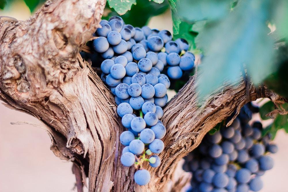 Morgan, wine, pinot noir, Pinot Noir