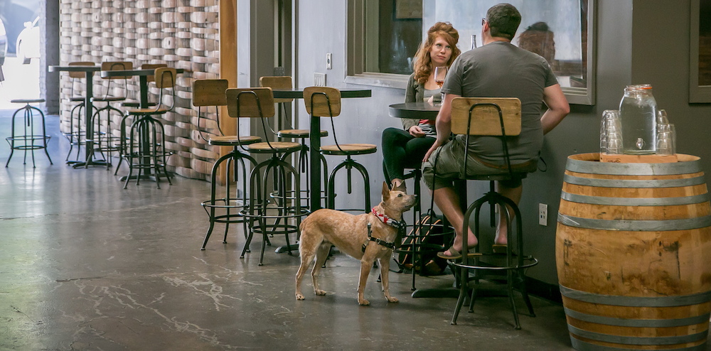 dog, friendly, winery, two, people, drinking, wine
