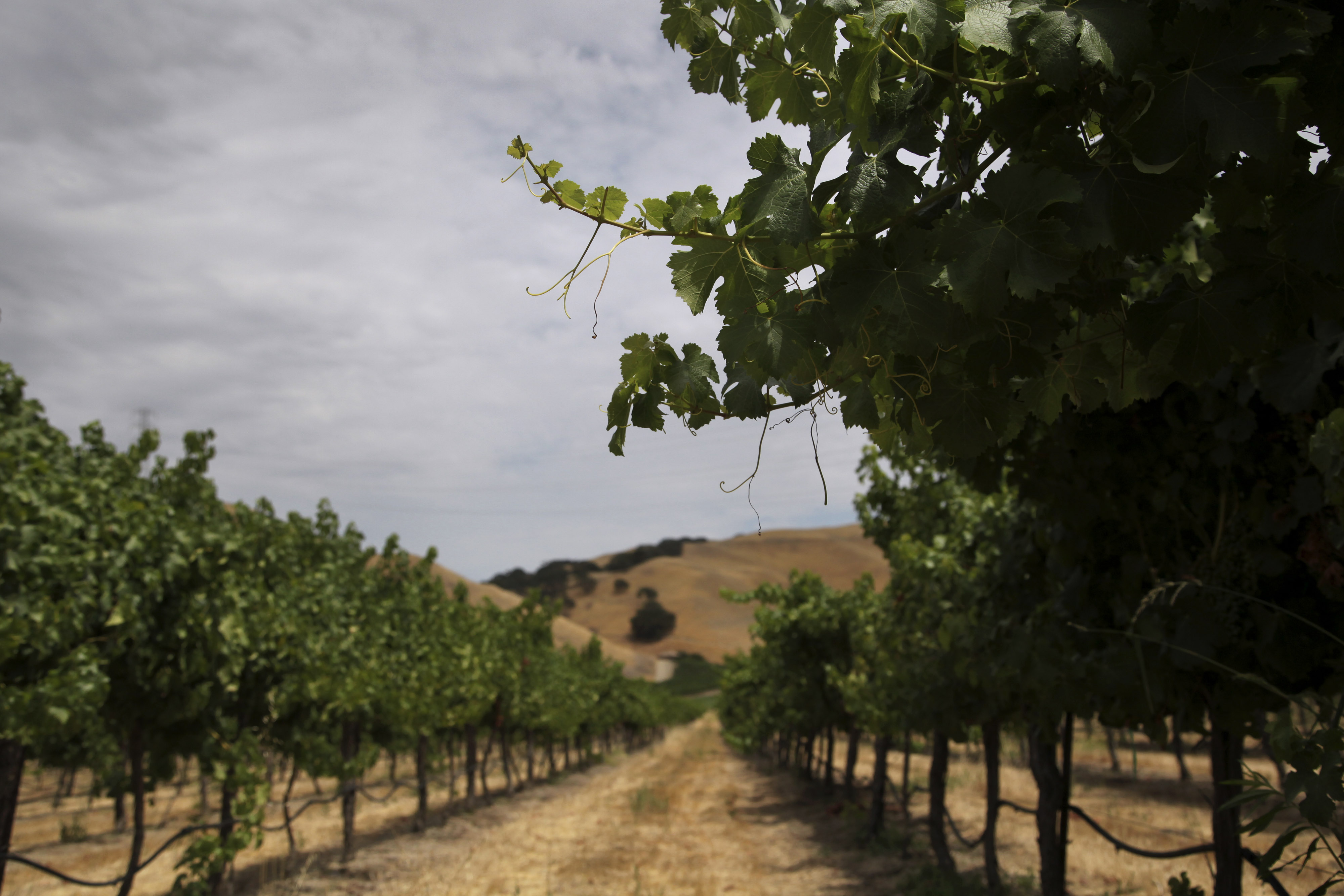 Concerts, vineyard, livermore