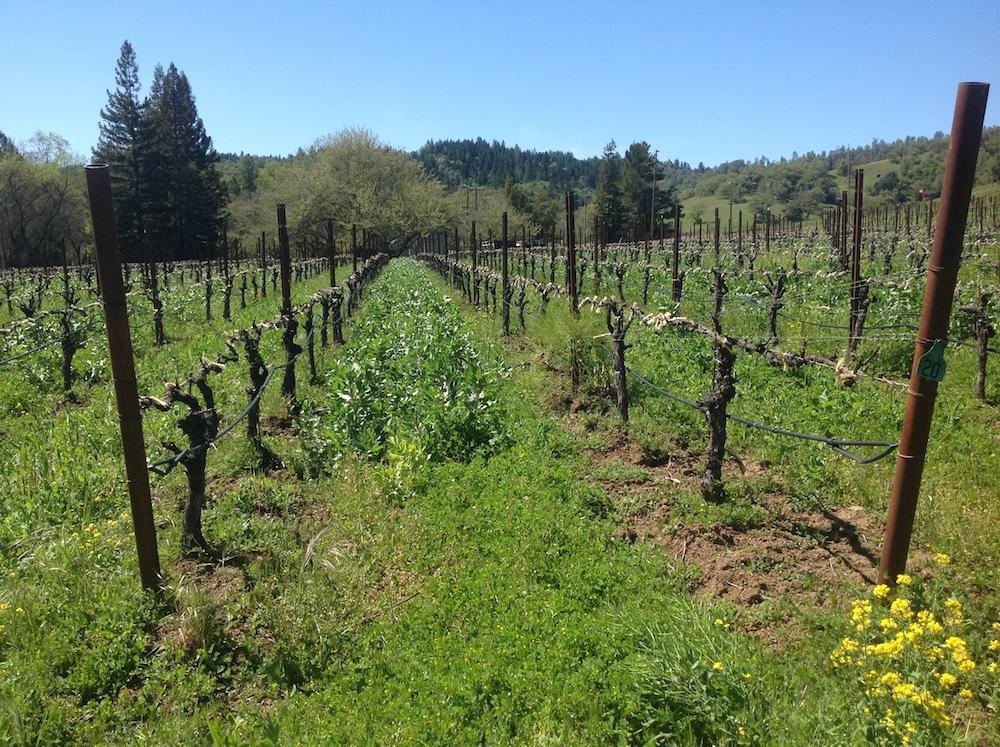 McFadden, farm, tasting room, winery, Hopland, Mendocino, California, The Press