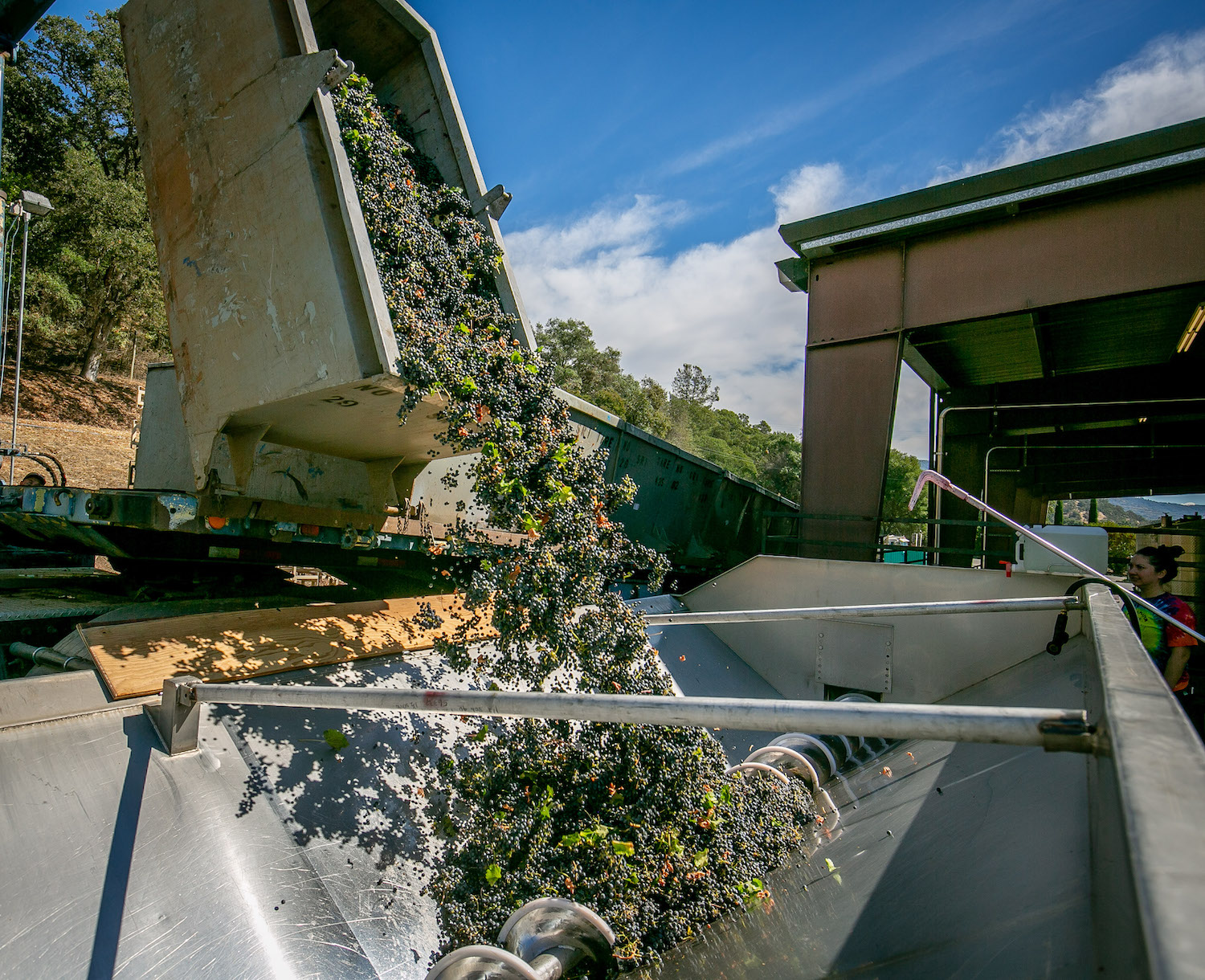 harvest, crush, wine 101, harvest 101, The Press