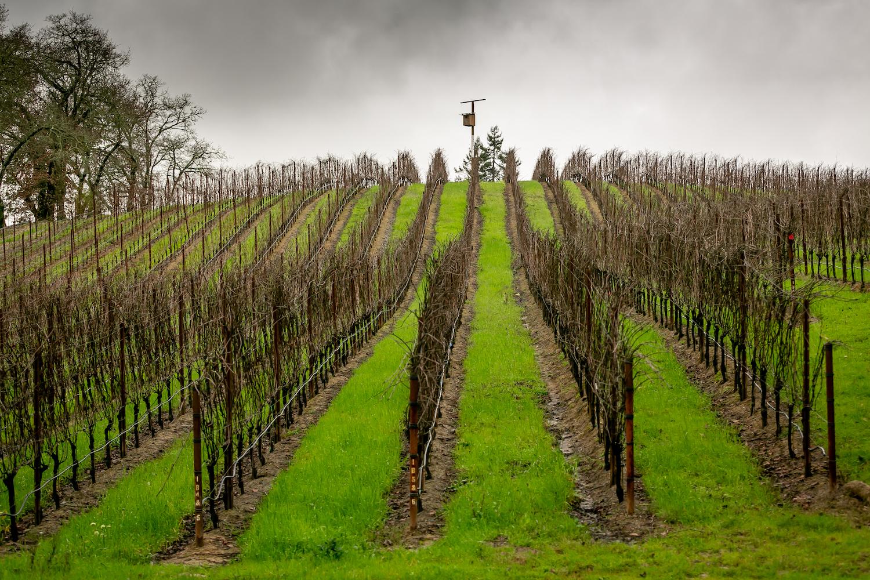 Occidental, Freeman, Freeman Winery, Sebastopol winery, The Press