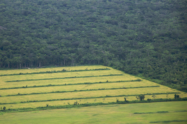 agriculture and current deforestation practices The authors ran the model under different scenarios that ranged from the current deforestation rate practices, intensifying the agriculture sector need.