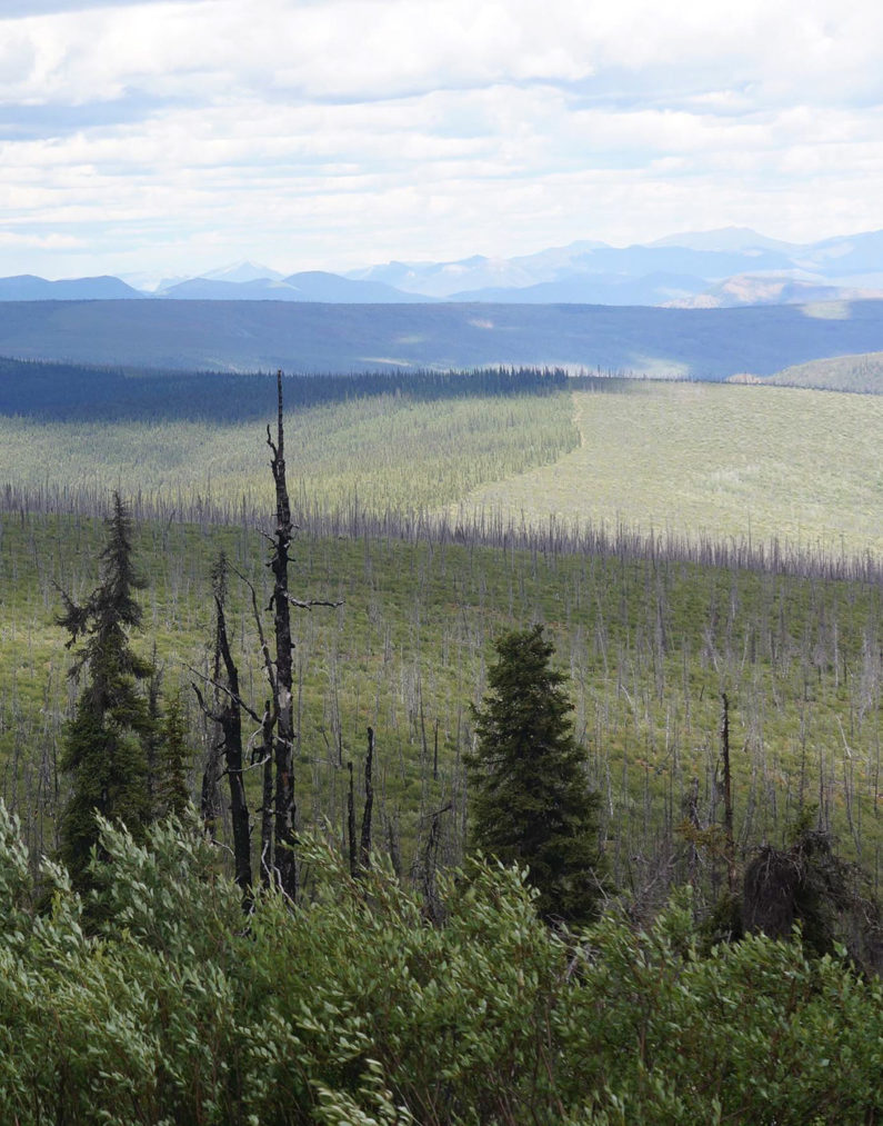 Human activities transform landscapes even in remote places, as illustrated by the dead trees and habitat fragmentation in Alaska's Tetlin Wildlife Refuge, affected by climate change and logging.