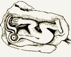 Birdman-Cult-Image-Smithsonian.jpg
