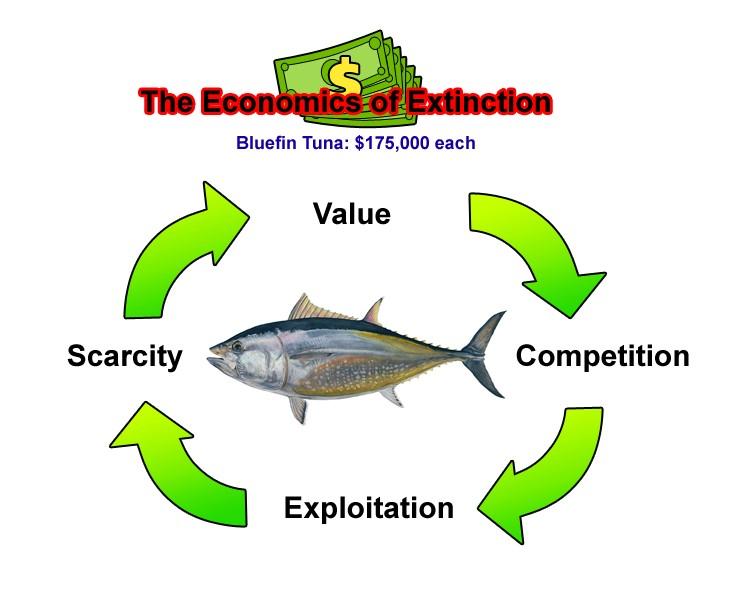 The-Economics-of-Extinction.jpg