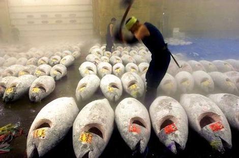 Tsukiji-Fish-Market-Japan.jpg