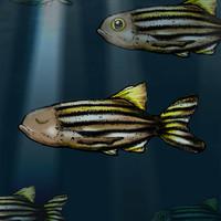 illustration of a sleeping fish