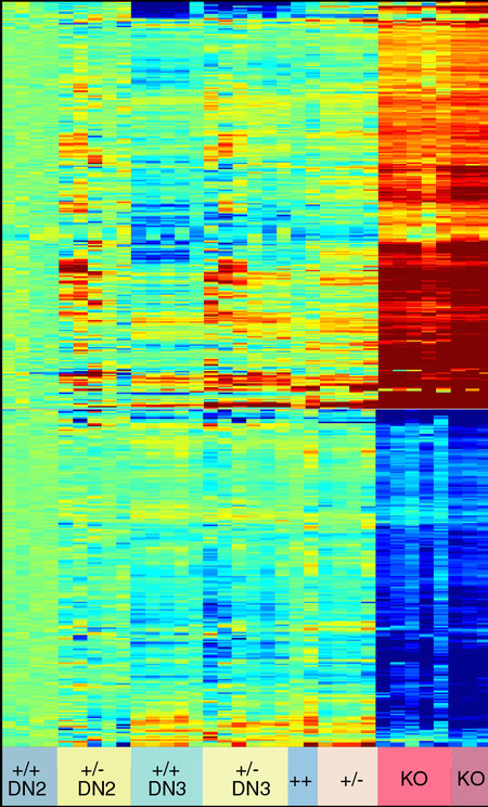 A heat map of gene expression