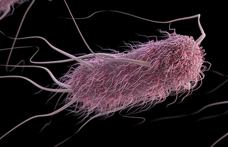 An artist's depiction of a bacterial cell