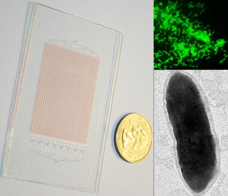 Photograph of a glass SlipChip for growing microbes, shown next to a US quarter (left). Fluorescent in situ hybridization image of the target organism (right, top). Transmission electron microscopy image of a single cell of the target organism (right, bot