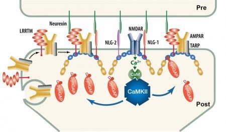 Post-phosphorylation
