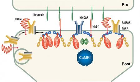 Pre-phosphorylation
