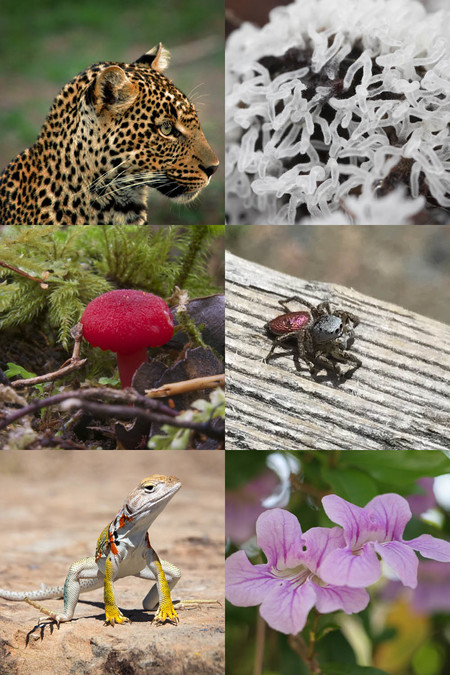 A collage showing a variety of lifeforms