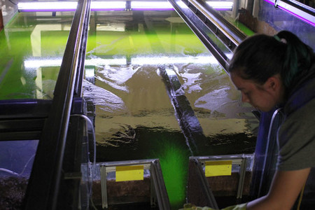 Sarah Steele, a sophomore majoring in planetary science, operates a flume as she studies the behavior of rivers.