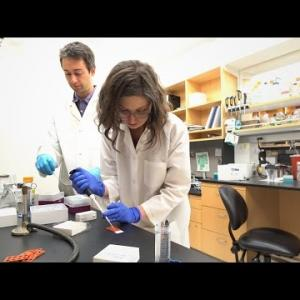 Caltech Collaboration Yields 3D View of Bacterial Infection