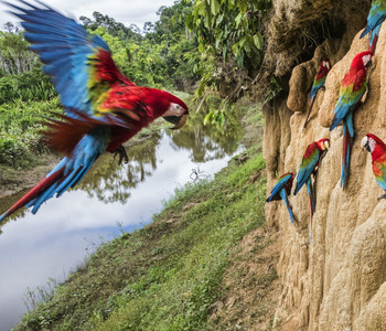 photo of macaws on a cliffside