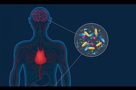 Caltech Researchers Link Parkinson's Disease to Gut Bacteria