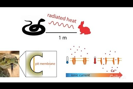 Engineers Create Artificial Skin That Feels Temperature Changes