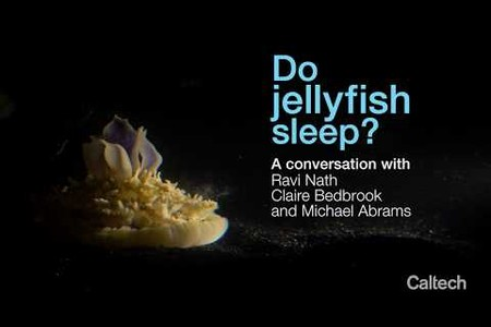 Do Jellyfish Sleep?