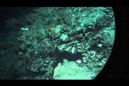Mound12 in Costa Rica