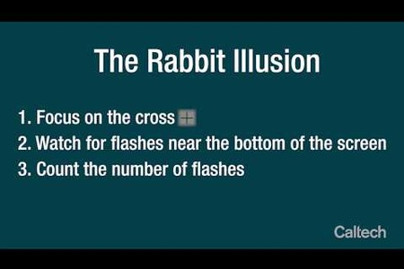 Rabbit Illusion rc