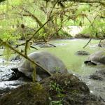 photo of Galápagos giant tortoises