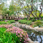 photo of Caltech's Throop Pond