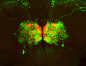 new technology will create brain wiring diagrams caltech new technology will create brain wiring diagrams