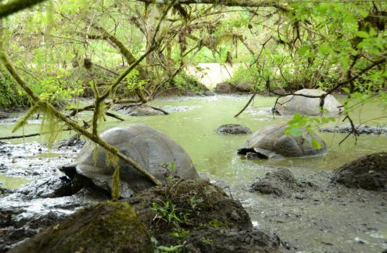 photo of Galápagos giant tortoises