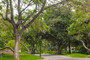 photo of San Pasqual Walk on the Caltech campus