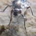 an alkali fly in a bubble.