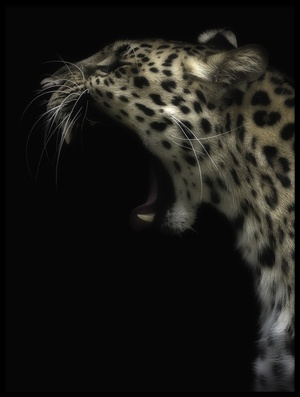 Buy this art print titled Amur Leopard In Colour II by the artist David williams