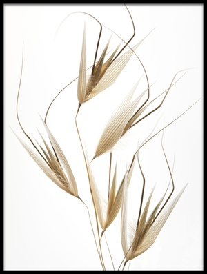 Buy this art print titled Delicacy of Nature by the artist Thierry Lagandré (Transgressed Light)