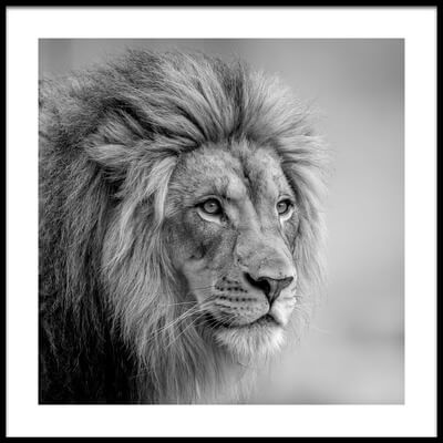 Buy this art print titled His Majesty by the artist Jeffrey C. Sink