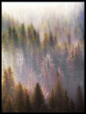 Buy this art print titled Misty Forest I by the artist Atul Chopra